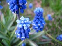 Flores azules hermosos Imágenes de archivo libres de regalías