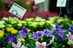 Flores azules para la venta Fotos de archivo libres de regalías