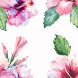Flores azules violetas rosadas tropicales de Hawaii del marco floral maravilloso tropical herbario verde claro del verano Fotografía de archivo libre de regalías