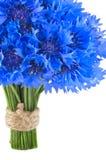 Flores azules vivas hermosas del aciano. Fotos de archivo
