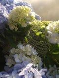 Flores azules y araña-Web Imagenes de archivo