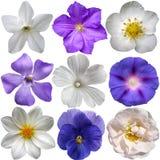 Flores azules y blancas imagenes de archivo