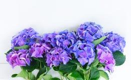Flores azules y violetas del hortensia Fotos de archivo libres de regalías