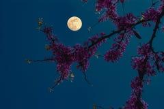Flores bajo claro de luna Foto de archivo libre de regalías
