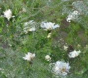 Flores bajo el hielo Imagenes de archivo
