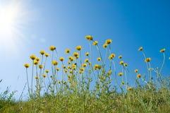 Flores bajo el sol Imagenes de archivo