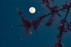 Flores bajo la luna imágenes de archivo libres de regalías