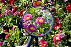 Flores bajo la lupa foto de archivo libre de regalías