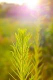 Flores bajo puesta del sol foto de archivo