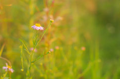 Flores bajo puesta del sol imagen de archivo libre de regalías