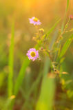 Flores bajo puesta del sol fotografía de archivo