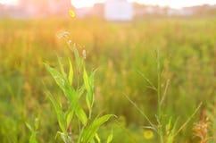Flores bajo puesta del sol fotos de archivo libres de regalías