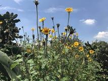 Flores bastante amarillas fotografía de archivo