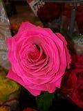 Flores bastante rojas Imagenes de archivo