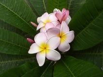 Flores bastante rosadas Fotos de archivo libres de regalías