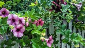 Flores bastante tropicales en la cerca imagen de archivo libre de regalías