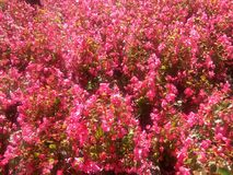 Flores blüht Flores-jardin Stockbild