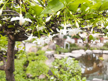 Flores blancas Foto de archivo