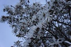 Flores blancas Fotos de archivo libres de regalías