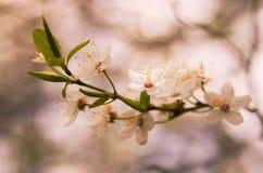 Flores blancas Imagen de archivo libre de regalías
