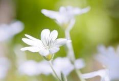 Flores blancas abstractas Imágenes de archivo libres de regalías