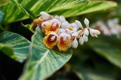 Flores blancas amarillas hermosas con las hojas verdes en el parque Imágenes de archivo libres de regalías