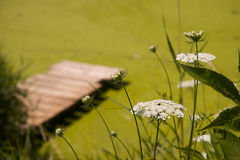 Flores blancas con el muelle Foto de archivo