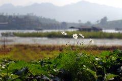 Flores blancas con las montañas detrás. Fotos de archivo