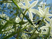 Flores blancas contra el cielo oscuro con las nubes ligeras imagen de archivo libre de regalías