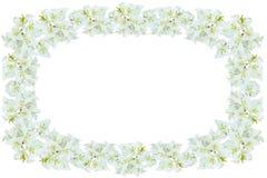 Flores blancas de la buganvilla Imágenes de archivo libres de regalías