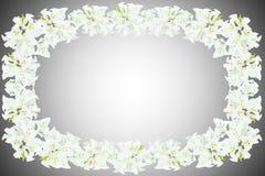 Flores blancas de la buganvilla Imagen de archivo