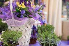 Flores blancas de la lavanda vistas cerca para arriba Fotografía de archivo libre de regalías