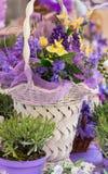 Flores blancas de la lavanda vistas cerca para arriba Fotos de archivo libres de regalías
