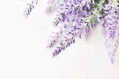 Flores blancas de la lavanda vistas cerca para arriba Imagen de archivo