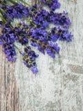 Flores blancas de la lavanda vistas cerca para arriba imágenes de archivo libres de regalías