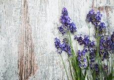 Flores blancas de la lavanda vistas cerca para arriba foto de archivo libre de regalías