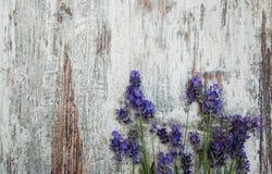 Flores blancas de la lavanda vistas cerca para arriba fotos de archivo