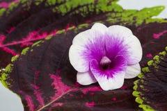 Flores blancas de la orquídea Fotos de archivo