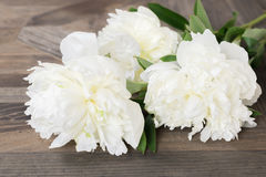 Flores blancas de la peonía en fondo de madera rústico Fotografía de archivo