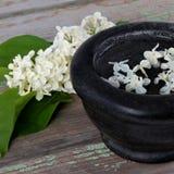 Flores blancas de la primavera de la lila Fotos de archivo