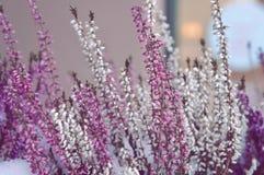 Flores blancas de la primavera del rosa delicado pequeñas fotos de archivo