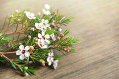Flores blancas de la primavera para el día de la madre fotos de archivo libres de regalías