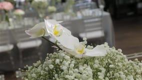 Flores blancas de las orquídeas metrajes