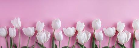 Flores blancas de los tulipanes sobre fondo rosa claro Tarjeta de felicitación o invitación de la boda fotografía de archivo libre de regalías