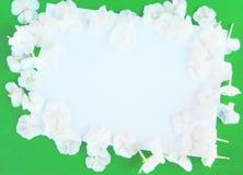 Flores blancas de una hortensia Imagenes de archivo