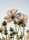 Flores blancas debajo del sol Fotografía de archivo