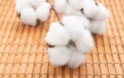 Flores blancas del algodón natural en la servilleta de bambú imagen de archivo libre de regalías