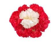 Flores blancas del clavel del color de rosa del carnationwith Fotografía de archivo libre de regalías