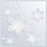 flores blancas del fondo Fotos de archivo libres de regalías