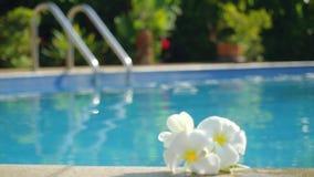 Flores blancas del frangipani del Plumeria por la piscina Los cambios se enfocan de las flores hermosas al agua de la piscina ade almacen de metraje de vídeo